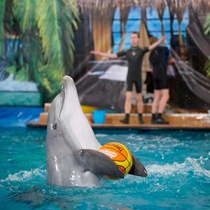 Дельфинарии, океанариумы Воскресенска