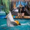 Дельфинарии, океанариумы в Воскресенске
